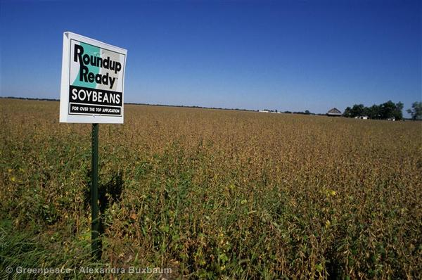 Roundup Soybean